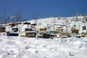 Read more about the article Winter Clustering is a Result of Poor Hive Insulation