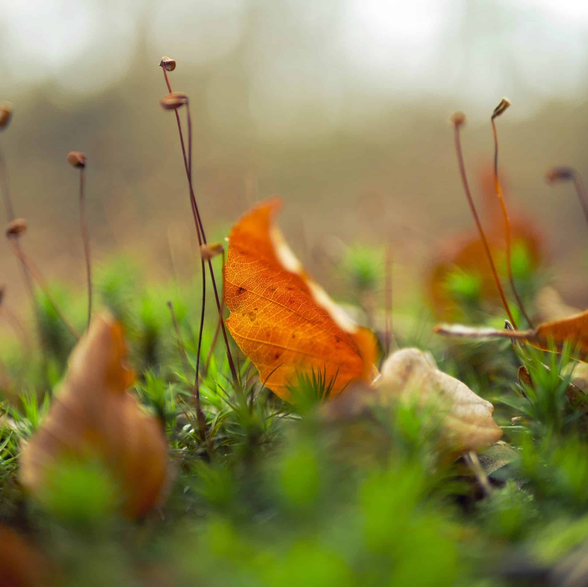 fall leaves on grass
