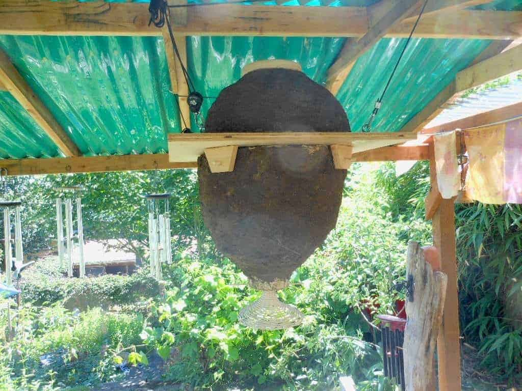 Read more about the article Straw Hives: A New/Old Way to Bee